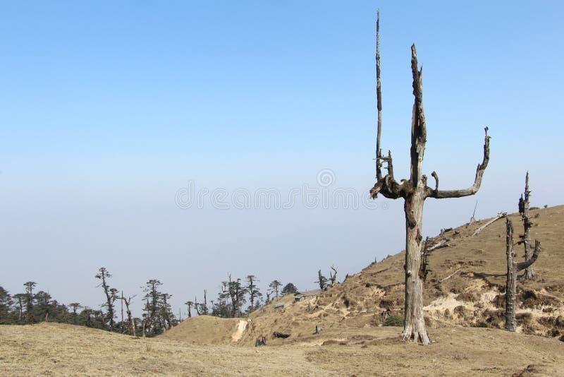 Vue de bois mort de montagne photos stock