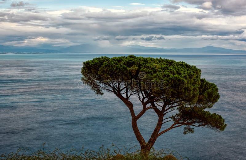 Vue de bord de mer derrière un arbre isolé sous les cieux bleus avec le duvet photos stock