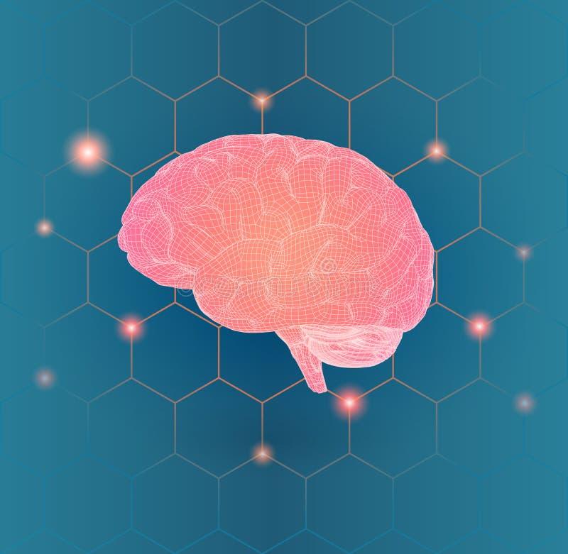 Vue de côté de cerveau de Wireframe sur la connexion hexagonale BG illustration stock
