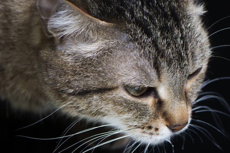 Vue de côté en gros plan de chat photographie stock libre de droits