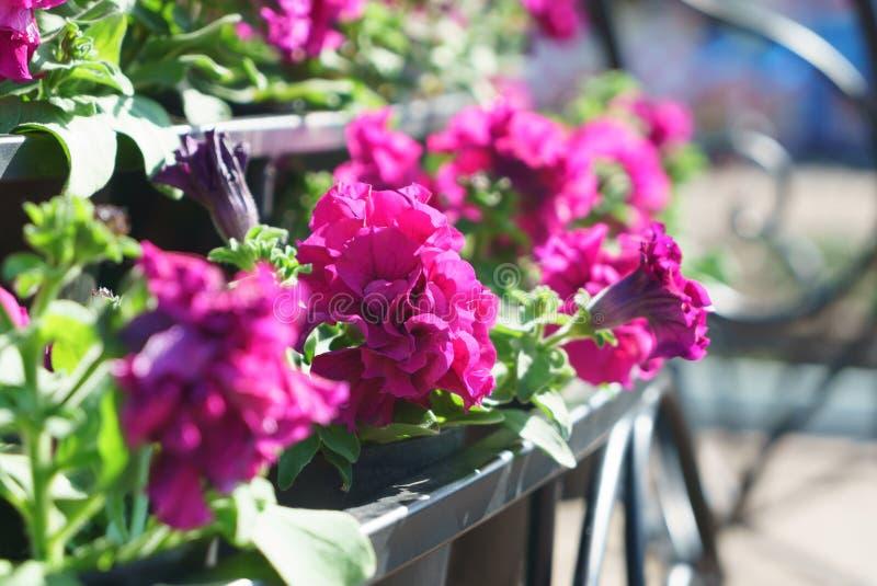 Vue de côté de plan rapproché des fleurs avec le bokeh formé artistique au b photographie stock