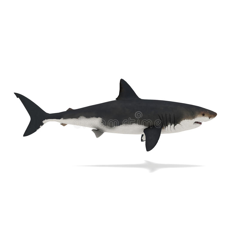Vue de côté du rendu du requin 3d illustration stock