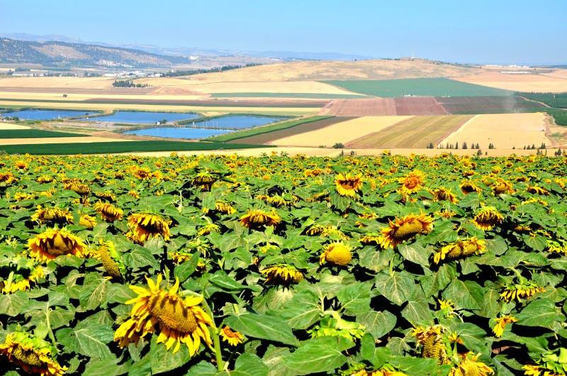 Vallée Israël de Jezrael photos stock