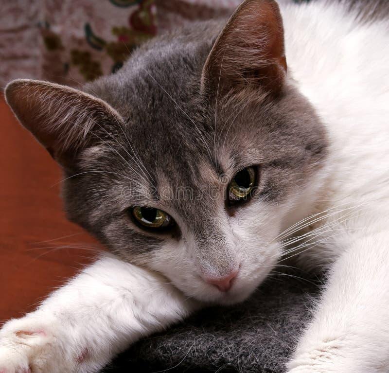 Vue de chat photo libre de droits