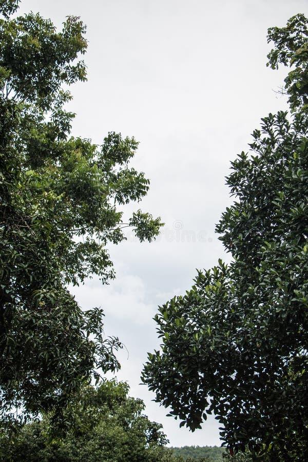 Vue de ciel avec les arbres grands photo stock