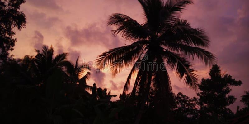 Vue de coucher du soleil avec le chat photos stock