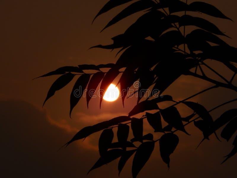 Vue de coucher du soleil capturant la beauté du soleil photos libres de droits