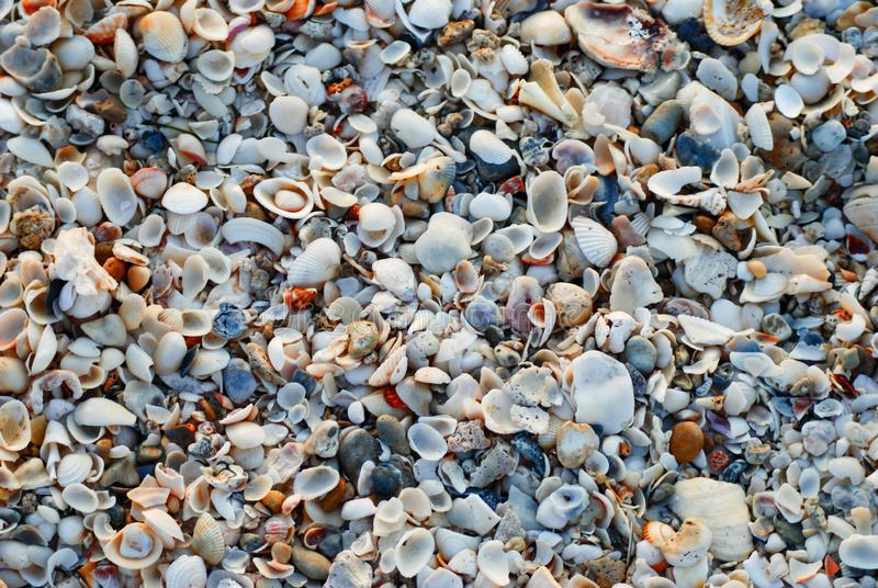 Vue de Coverhead des coquillages à la plage photographie stock libre de droits