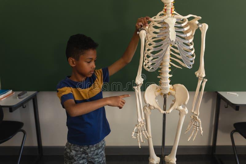 Vue de face d'écolier expliquant le modèle squelettique humain dans la salle de classe photo libre de droits