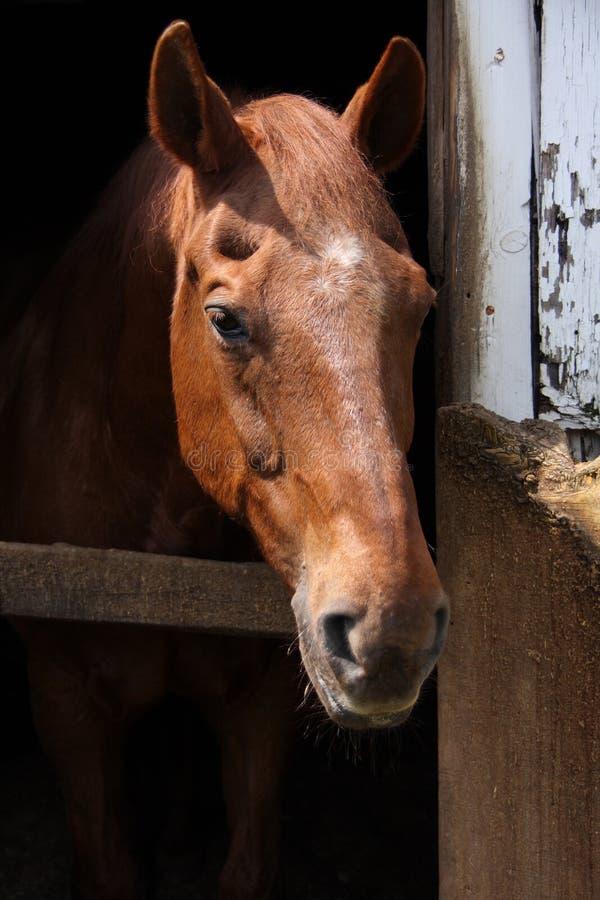 vue de face de cheval de brown image stock image du workhorse jument 21645799. Black Bedroom Furniture Sets. Home Design Ideas