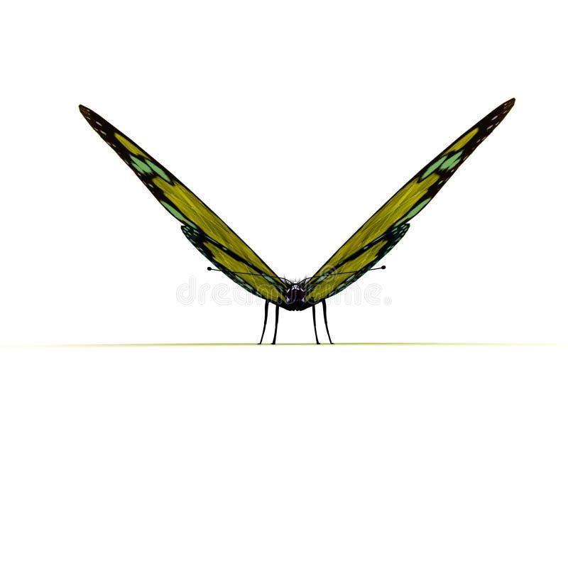 Vue de face de guindineau jaune illustration stock