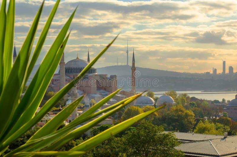 Vue de Hagia Sophia et de Bosphorus par les feuilles des palmiers pendant le début de la matinée photos libres de droits