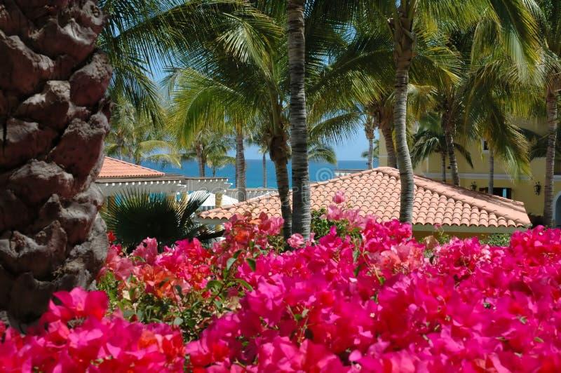 Vue de jardin des dessus de toit dans Cabo San Lucas, Mexique image stock
