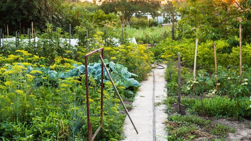 Vue de jardin de pays au coucher du soleil d'été image libre de droits