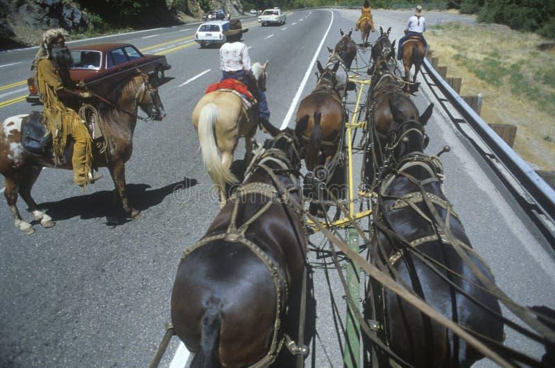 Vue de l'équipe des chevaux dans le train de chariot images libres de droits