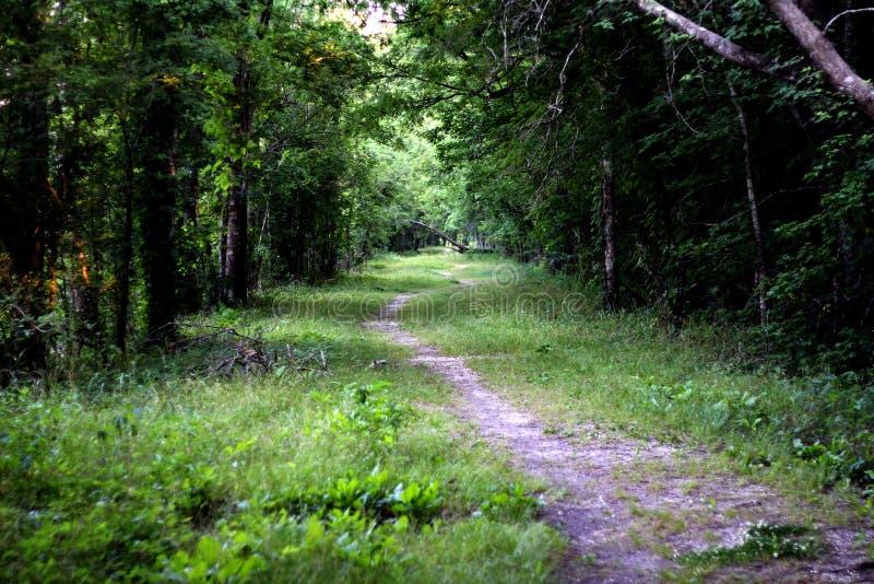 Vue de l'itinéraire aménagé pour amateurs de la nature dans le lac Martin Louisiana image stock