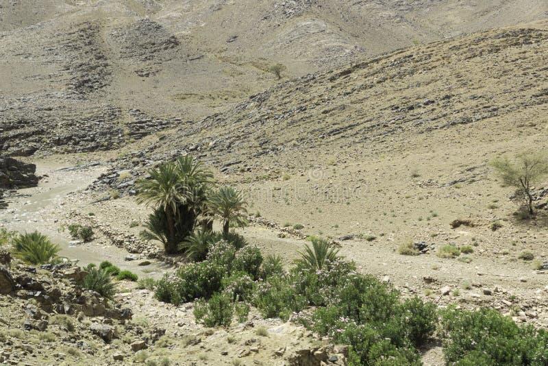 Vue de l'oasis et des déserts photo stock
