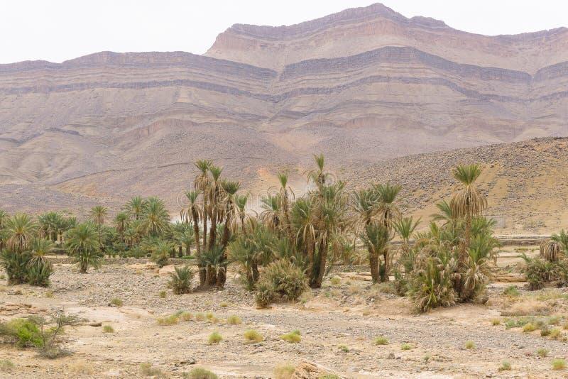 Vue de l'oasis et des déserts image libre de droits