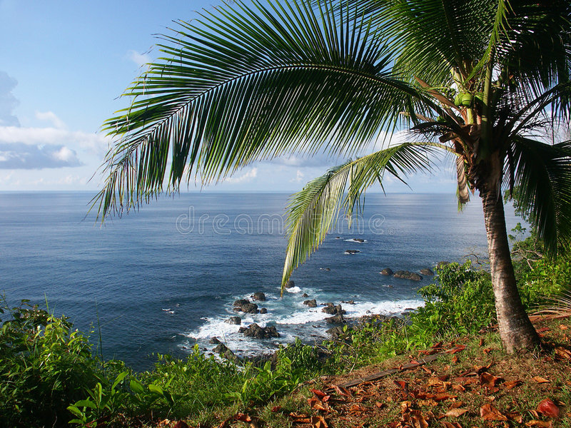 Vue de l'océan avec le palmtree image libre de droits