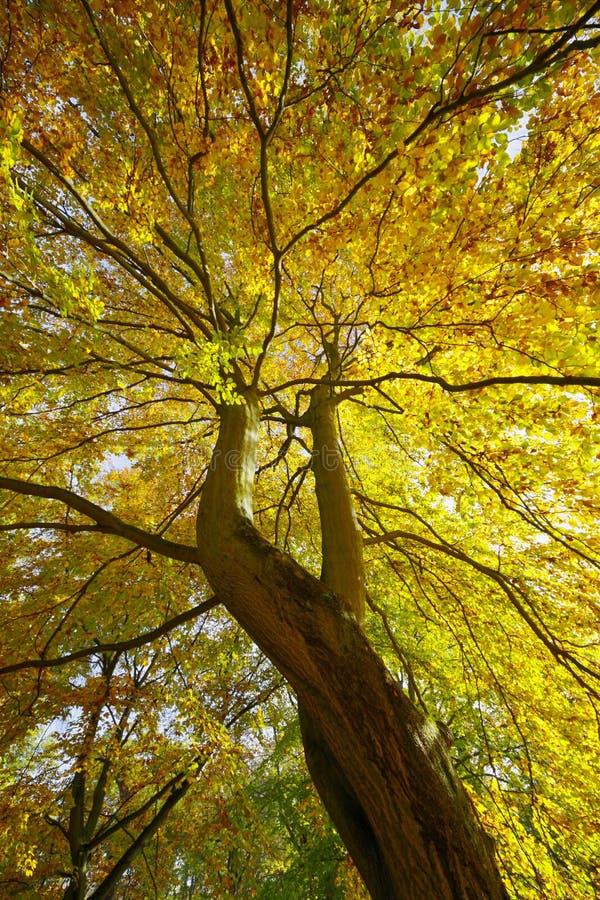 Vue de la couronne d'arbre image stock