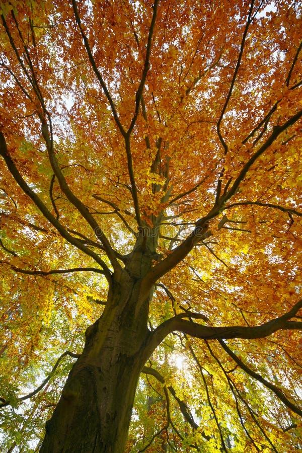 Vue de la couronne d'arbre photo libre de droits