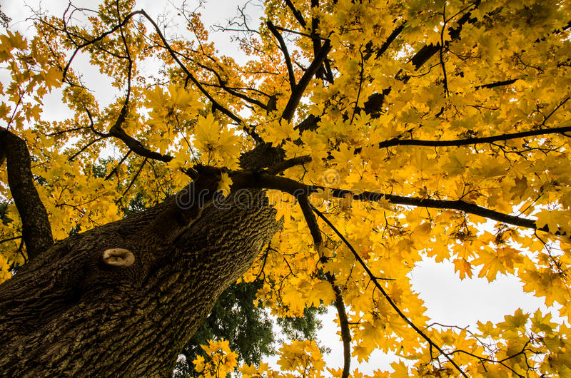 Vue de la couronne de l'arbre image libre de droits