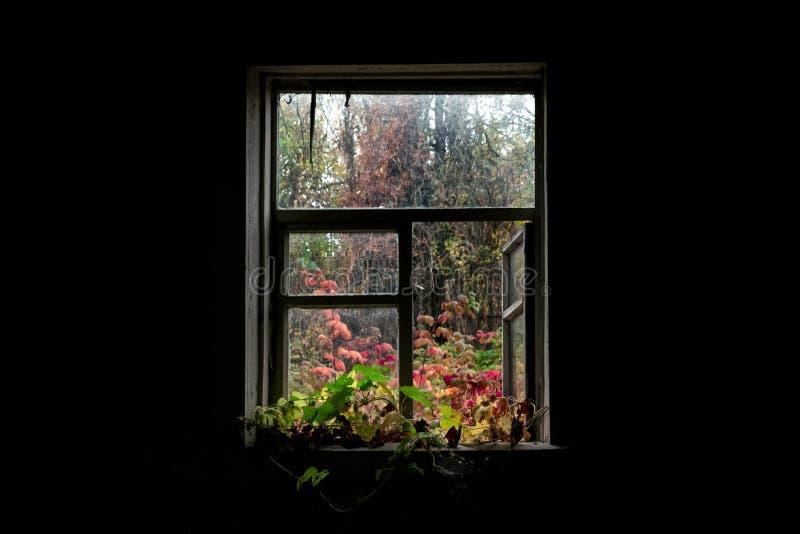 Vue de la fenêtre sur la cour d'automne images stock