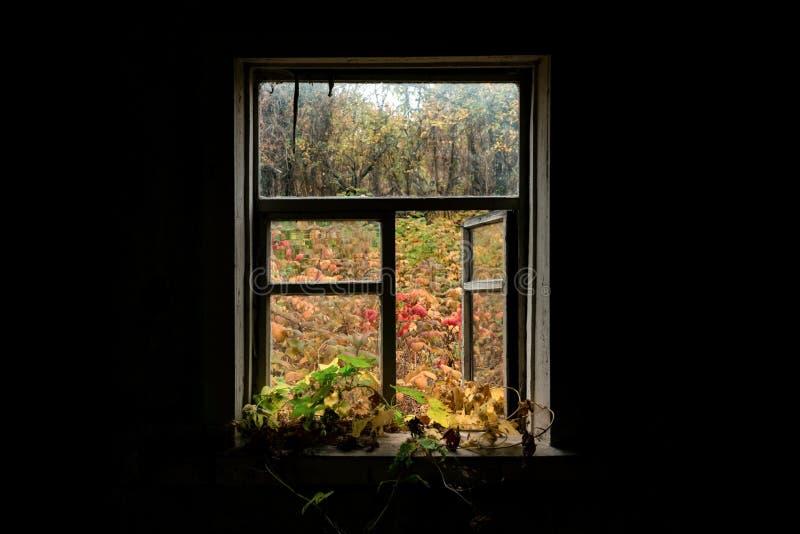 Vue de la fenêtre sur la cour d'automne photos libres de droits
