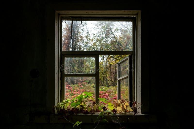 Vue de la fenêtre sur la cour d'automne image stock