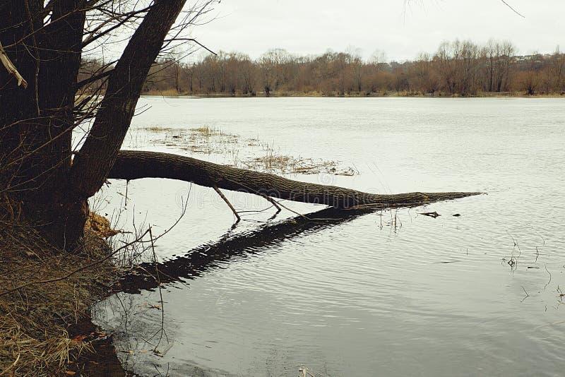 Vue de la flaque de rivière images stock