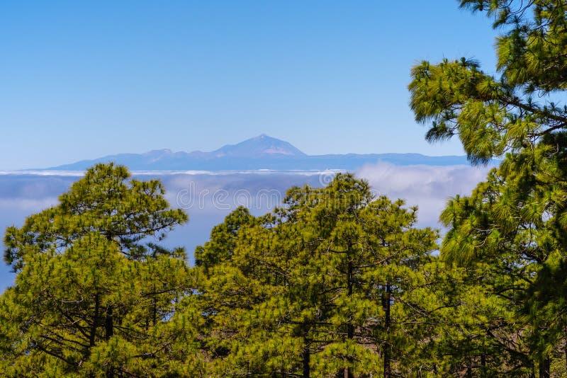 Vue de la forêt de Tamadaba sur mamie Canaria à Pico de Teide sur Teneriffa image libre de droits