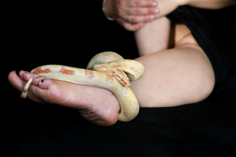 Vue de la jambe de femme avec serpent Espèces albinos non toxiques de Boa constrictor de serpent, de crapules, de rampes et d'env photographie stock libre de droits