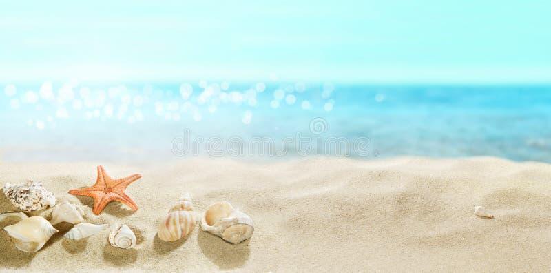 Vue de la plage sablonneuse Coquilles dans le sable photos libres de droits