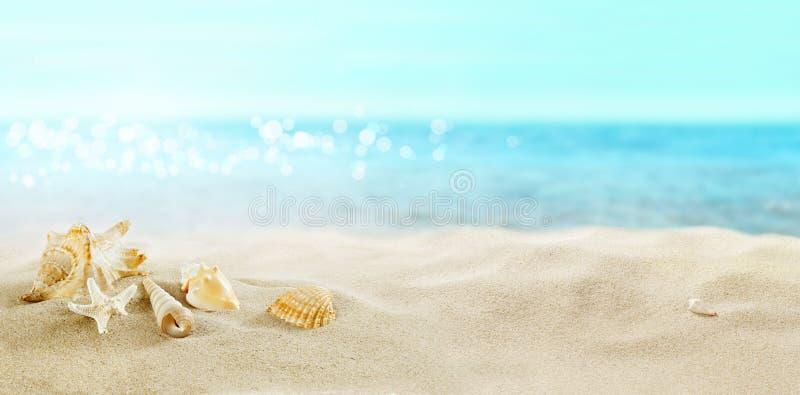 Vue de la plage sablonneuse Coquilles dans le sable photo stock