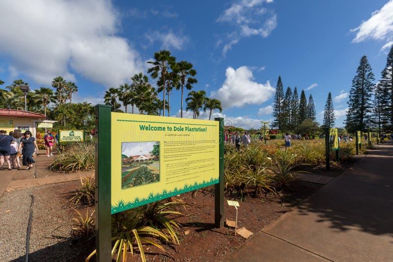 Vue de la plantation d'ananas de Dole dans Wahiawa, destination de visite images libres de droits