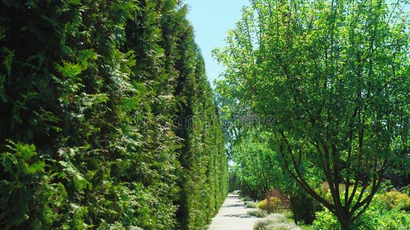 Vue de la premi?re personne Promenade le long des arbres le long d'un chemin en beau parc un jour ensoleill? d'?t? photographie stock libre de droits