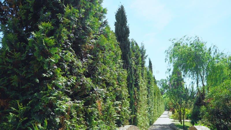 Vue de la premi?re personne Promenade le long des arbres le long d'un chemin en beau parc un jour ensoleill? d'?t? photo libre de droits