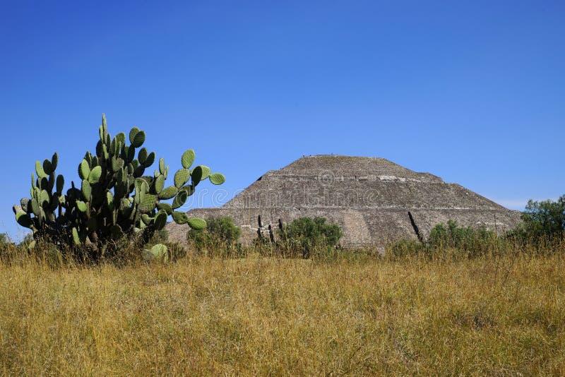 Vue de la pyramide du Sun avec un grand cactus sur le premier plan, Teotihuacan, Mexique photos stock