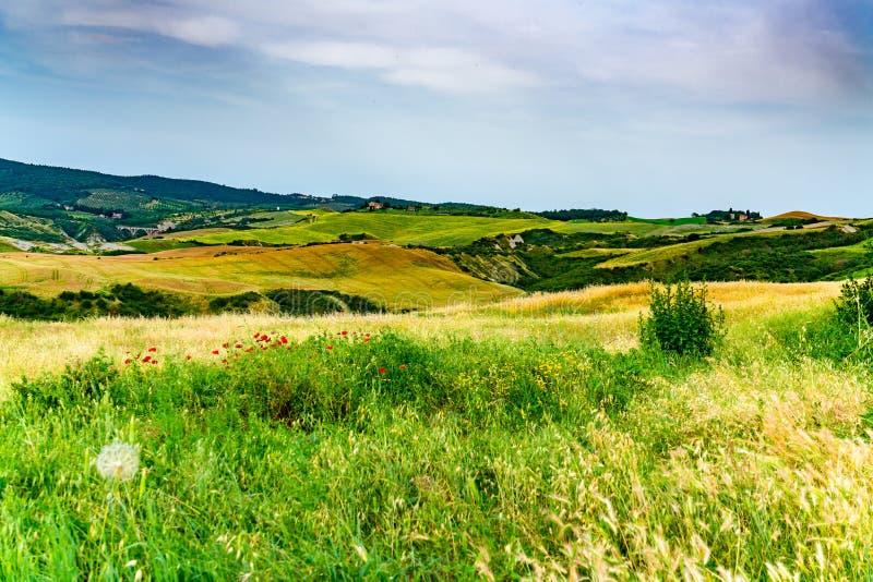 Vue de la Toscane accidentée avec le champ des fleurs et de la terre cultivée images stock