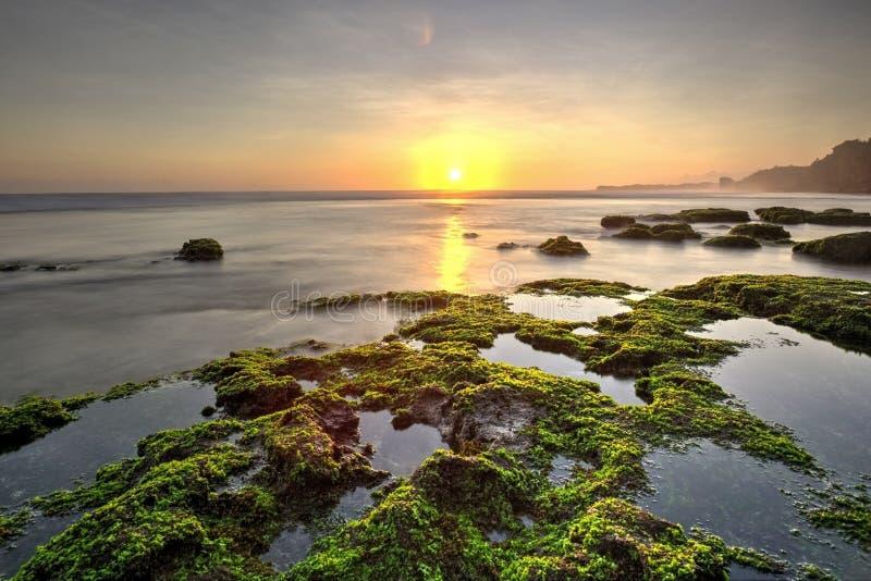 Vue de la vie marine à l'île de Semporna photos libres de droits
