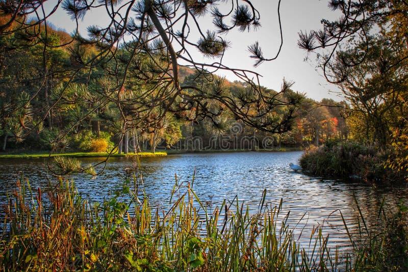 Vue de lac image libre de droits