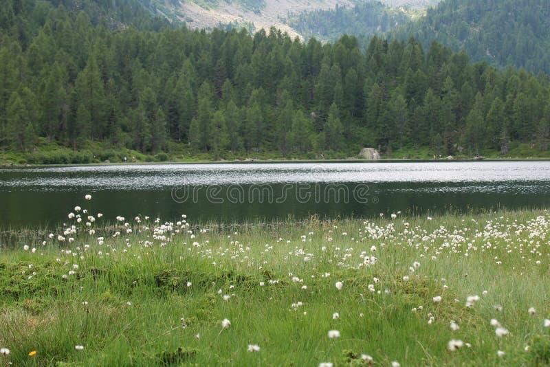 Vue de lac Malghette en Trentino Alto Adige Italy photos stock