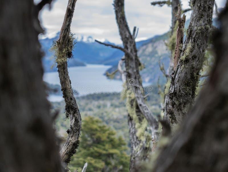 Vue de lac Nahuel Huapi de la forêt de Cerro Llao Llao parmi de vieux arbres image stock