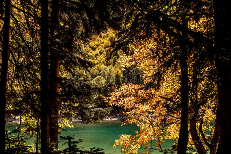 Vue de lac par la forêt verte rouge d'automne image libre de droits