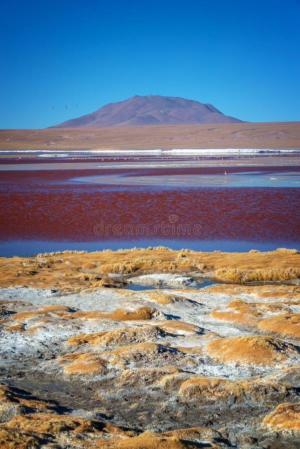 Vue de Laguna Colorada, lac de sel coloré dans la province de Sur Lipez, Potosi Bolivie photos stock