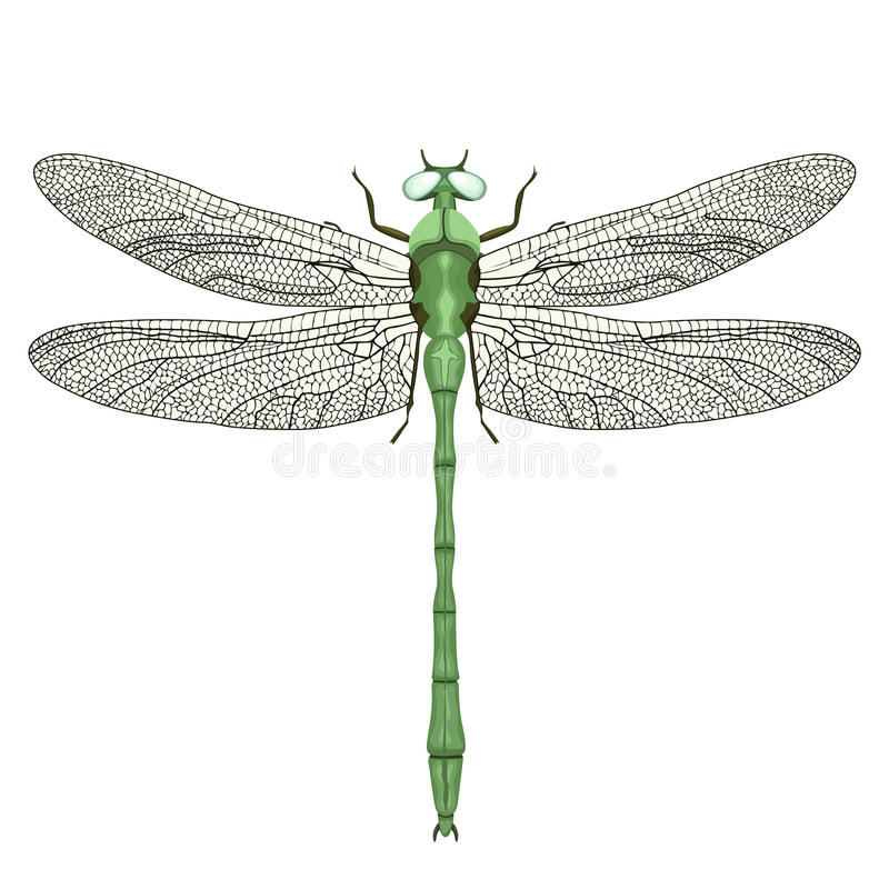 Vue de libellule d 39 en haut d 39 isolement sur le fond blanc for Table vue de haut