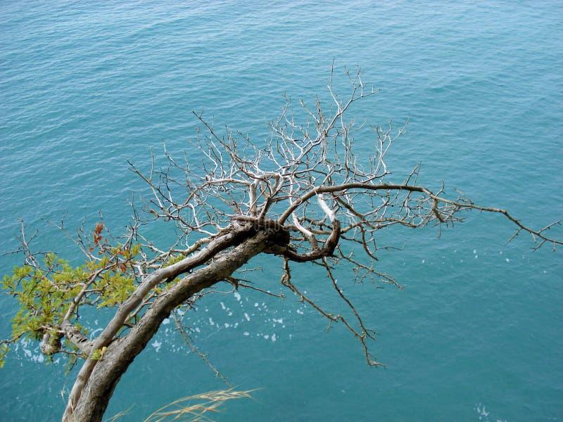 Vue de mer de la roche image libre de droits