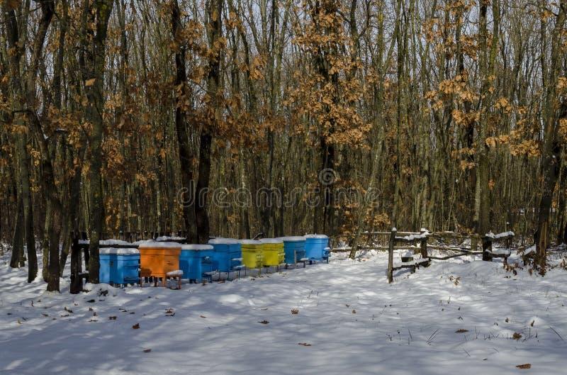 Vue de Milou vers le rucher avec la ruche d'abeille dans le domaine d'hiver à la forêt à feuilles caduques photos stock