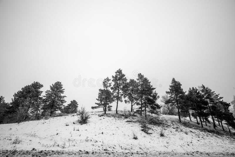 Vue de mouvement de forêt de pin de montagne à l'horaire d'hiver images stock
