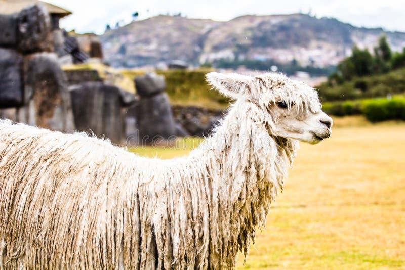 Vue de mur de Sacsayhuaman, dans Cuzco, le Pérou. photographie stock libre de droits